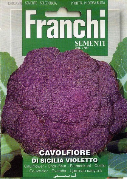 Franchi Samen Cavolfiore di Sicilia Violetto Blumenkohl